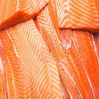 Salmon slices background. Close up.